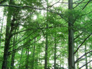 あんの木|オリジナル壁紙例21